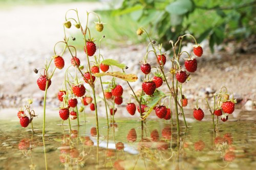 wildberries_land_art_river_sm.jpg